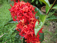 fleur_rouge3.jpg